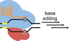 Abstract Image Editing the Genome Without Double-Stranded DNA Breaks