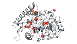 Enzyme catalyzes 380 times as many reactions as earlier catalysts.