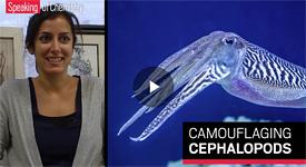 How do cephalopods achieve their crazy-colorful chemistry?