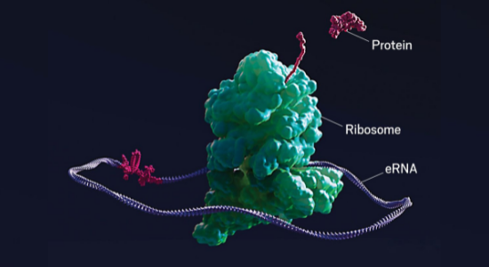 Flagship launches Laronde to develop circular RNA therapies.